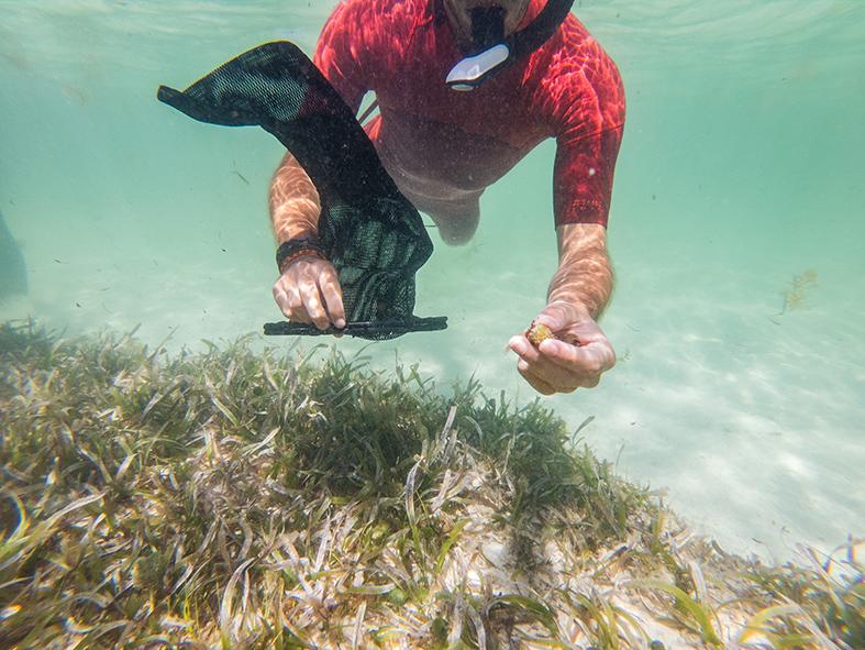 A la recherche des graines d'herbiers marins