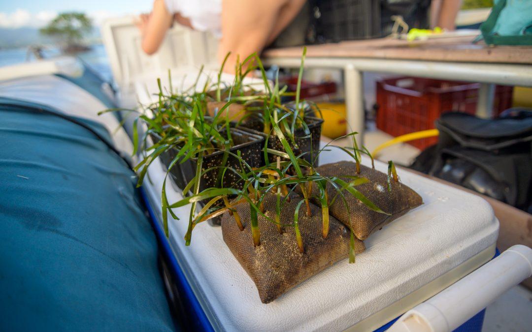 Restauration d'herbiers, où en sommes-nous ?